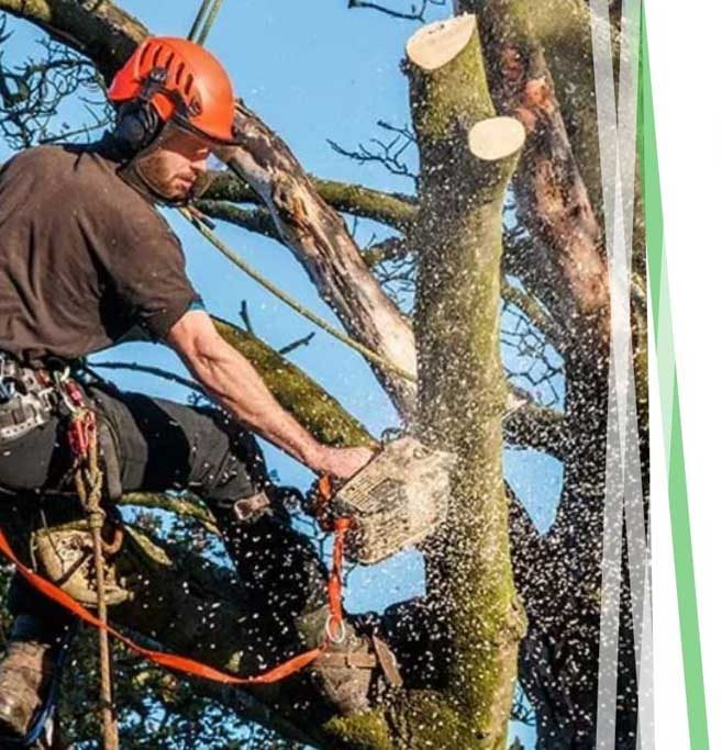 tree-surgeon-life-insurance-img-e1597927357778